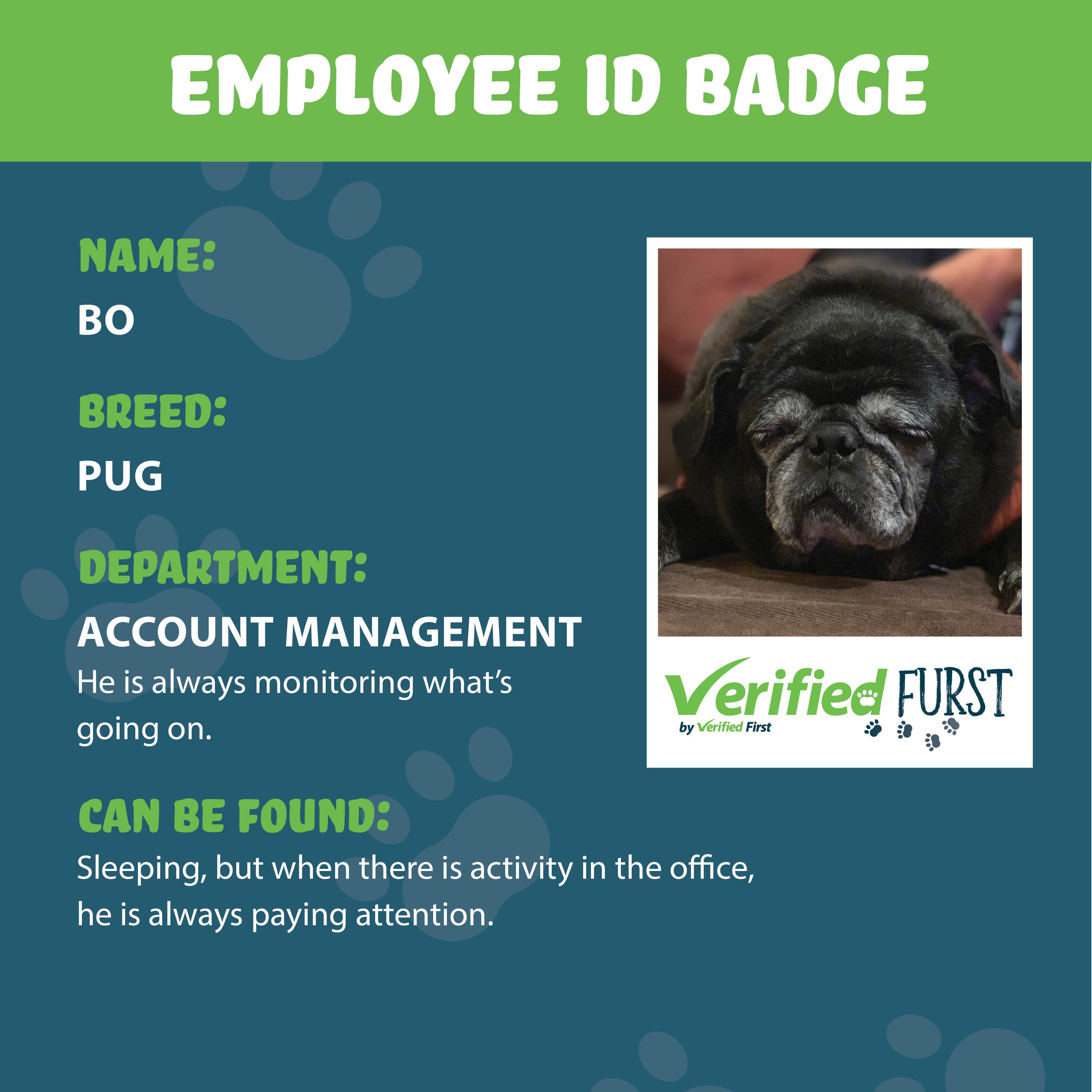VerifiedFurst_Bo-Pug