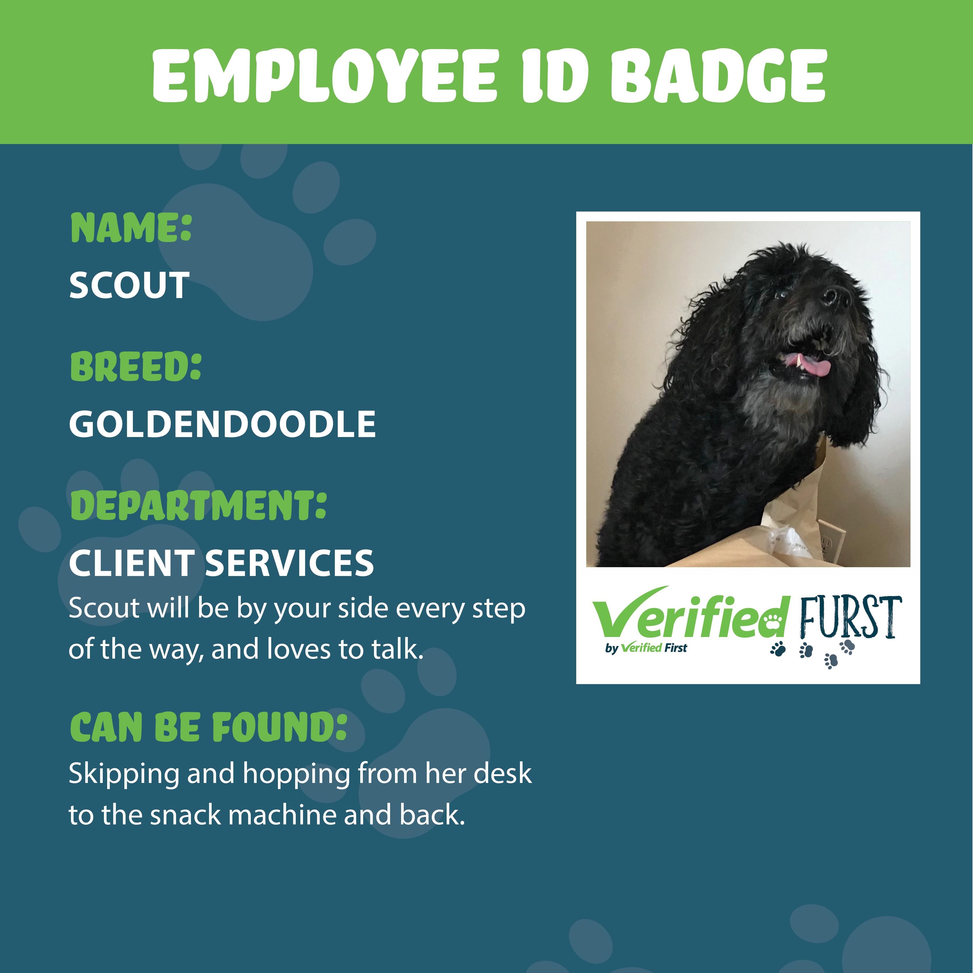 VerifiedFurst_Scout-Goldendoodle